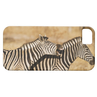 Two zebras standing in grass barely there iPhone 5 case