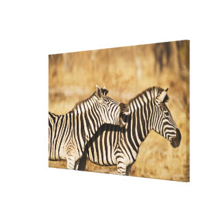 Two zebras standing in grass canvas print