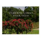 Tyler Rose Garden Postcard