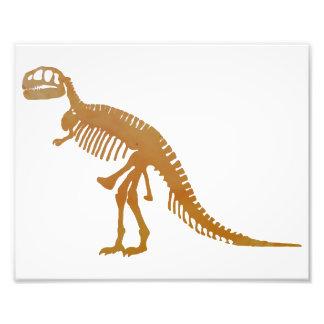 Tyrannosaurus skeleton photograph