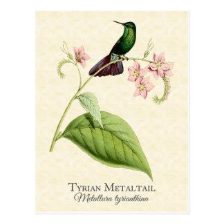Tyrian Metal Tail Hummingbird Art Postcard