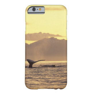 U.S.A., Alaska, Inside Passage Humpback whale at Barely There iPhone 6 Case
