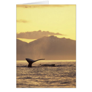 U.S.A., Alaska, Inside Passage Humpback whale at Cards
