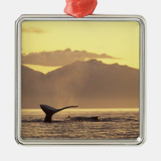 U.S.A., Alaska, Inside Passage Humpback whale at Christmas Ornament
