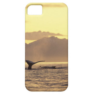 U.S.A., Alaska, Inside Passage Humpback whale at iPhone 5 Case