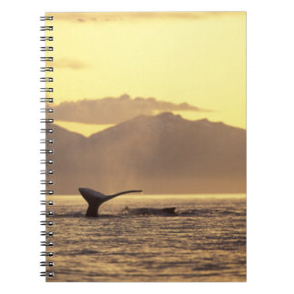 U.S.A., Alaska, Inside Passage Humpback whale at Notebooks