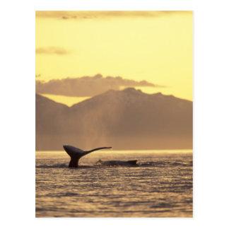 U.S.A., Alaska, Inside Passage Humpback whale at Postcard