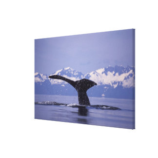 U.S.A., Alaska, Inside Passage Humpback whale Canvas Print