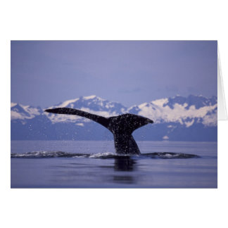 U.S.A., Alaska, Inside Passage Humpback whale Greeting Card