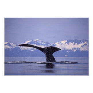 U.S.A., Alaska, Inside Passage Humpback whale Photo Print