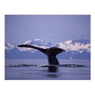 U.S.A., Alaska, Inside Passage Humpback whale Postcard