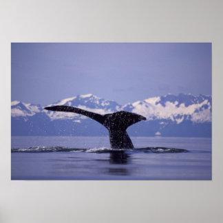 U.S.A., Alaska, Inside Passage Humpback whale Poster