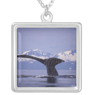 U.S.A., Alaska, Inside Passage Humpback whale Silver Plated Necklace
