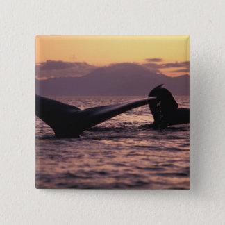 U.S.A., Alaska, Inside Passage Humpback whales 15 Cm Square Badge