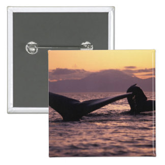 U.S.A., Alaska, Inside Passage Humpback whales 15 Cm Square Badge