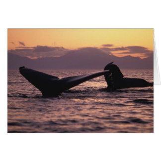 U.S.A., Alaska, Inside Passage Humpback whales Card