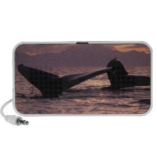 U.S.A., Alaska, Inside Passage Humpback whales iPod Speakers