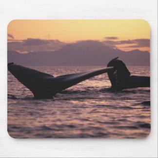 U.S.A., Alaska, Inside Passage Humpback whales Mouse Mat