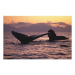 U.S.A., Alaska, Inside Passage Humpback whales Photo