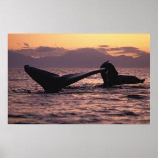 U.S.A., Alaska, Inside Passage Humpback whales Poster