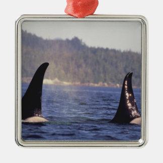 U.S.A., Alaska, Inside Passage Surfacing Orca Christmas Ornament
