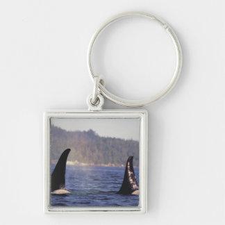 U.S.A., Alaska, Inside Passage Surfacing Orca Silver-Colored Square Key Ring