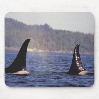 U.S.A., Alaska, Inside Passage Surfacing Orca Mouse Mat