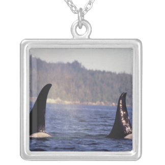 U.S.A., Alaska, Inside Passage Surfacing Orca Silver Plated Necklace