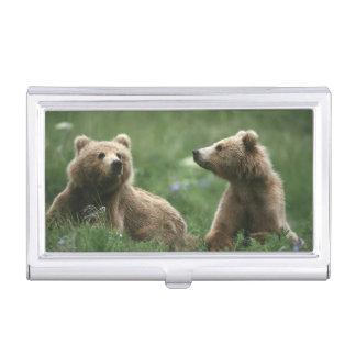 U.S.A., Alaska, Kodiak Two sub-adult brown bears Business Card Holder
