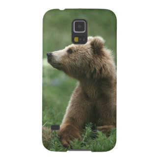 U.S.A., Alaska, Kodiak Two sub-adult brown bears Galaxy S5 Covers