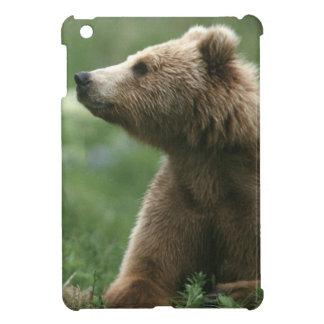 U.S.A., Alaska, Kodiak Two sub-adult brown bears iPad Mini Case