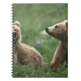 U.S.A., Alaska, Kodiak Two sub-adult brown bears Notebook