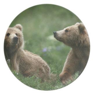 U.S.A., Alaska, Kodiak Two sub-adult brown bears Plate