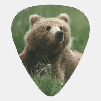 U.S.A., Alaska, Kodiak Two sub-adult brown bears Plectrum