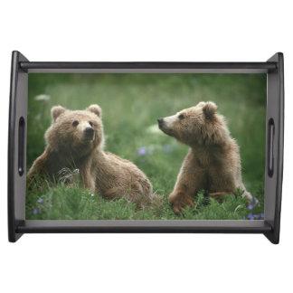U.S.A., Alaska, Kodiak Two sub-adult brown bears Serving Tray