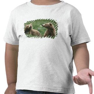 U.S.A., Alaska, Kodiak Two sub-adult brown bears Tshirt