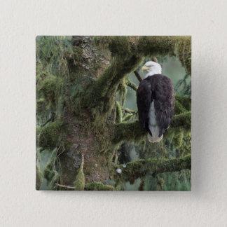 U.S.A., Alaska, Southeast Alaska Bald eagle 15 Cm Square Badge