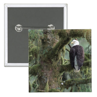 U.S.A., Alaska, Southeast Alaska Bald eagle 15 Cm Square Badge