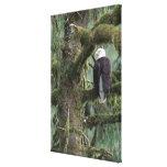 U.S.A., Alaska, Southeast Alaska Bald eagle Canvas Print