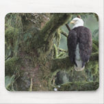 U.S.A., Alaska, Southeast Alaska Bald eagle Mouse Mat