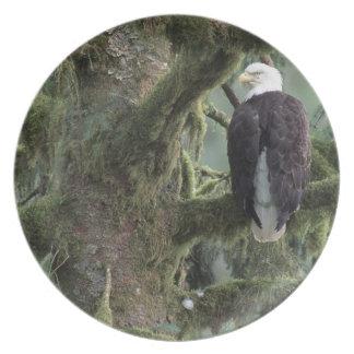 U.S.A., Alaska, Southeast Alaska Bald eagle Plate