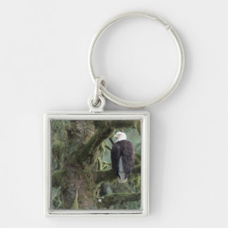 U.S.A., Alaska, Southeast Alaska Bald eagle Silver-Colored Square Key Ring