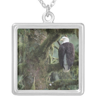 U.S.A., Alaska, Southeast Alaska Bald eagle Silver Plated Necklace