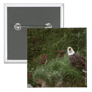 U.S.A., Alaska, Unalaska Island Bald eagle Pinback Button