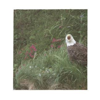 U.S.A., Alaska, Unalaska Island Bald eagle Notepad