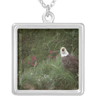 U.S.A., Alaska, Unalaska Island Bald eagle Silver Plated Necklace