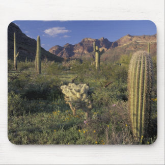 U.S.A., Arizona, Organ Pipe National Monument. Mouse Mat