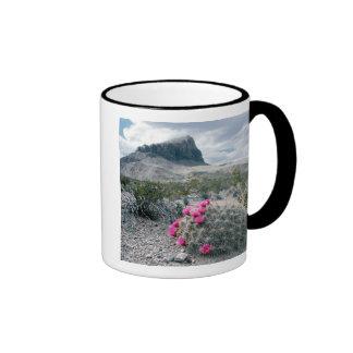 U.S.A., Texas, Big Bend National Park. Blooming Mugs
