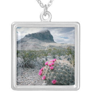 U.S.A., Texas, Big Bend National Park. Blooming Necklaces