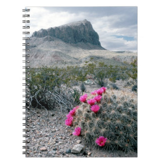U.S.A., Texas, Big Bend National Park. Blooming Spiral Note Books